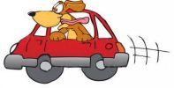 dog_car
