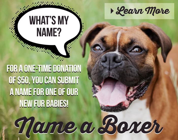 Name a Boxer
