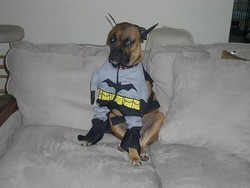 Batdog_250x250