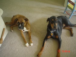Dogs 002_250x250