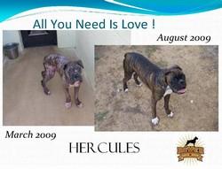 hercules_250x250