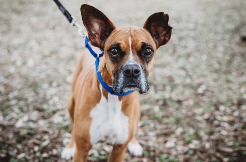 Rescue Dog Adoption Austin