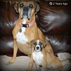 Sadie (ABR Tara) & Blake (ABR Patton)