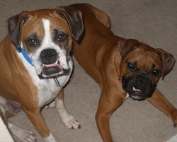 Bailey and Boonie