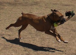 Layla Running With Toy_250x250