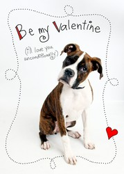 valentine_card_2011_small_250x250