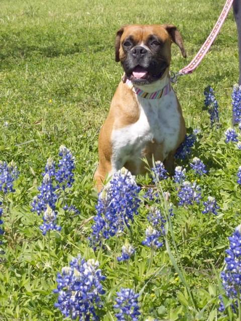 Enjoying her wildflower outing