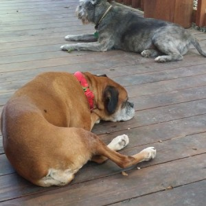 Naptime on the deck-20160609