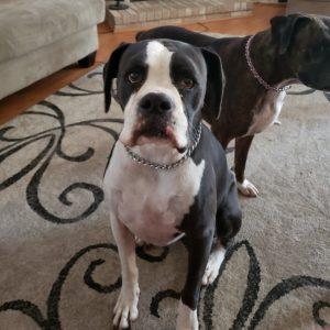 Bella & Diesel