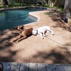 Do Dogs Need Sunscreen?