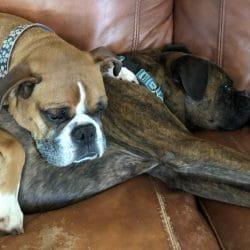Gizmo (Satchmo) & Bubba (Rogness)