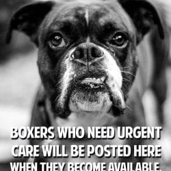 Boxers In Need