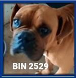 BIN 2529