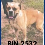 BIN 2532