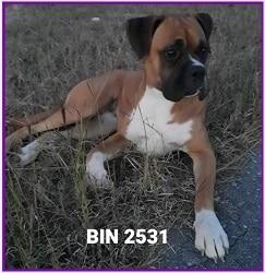 BIN 2531